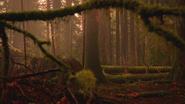 5x13 forêt de Storybrooke des Enfers
