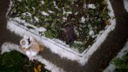 7x09 Jardin neige Gothel Anastasie Gothel aide