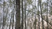 5x08 forêt calédonienne