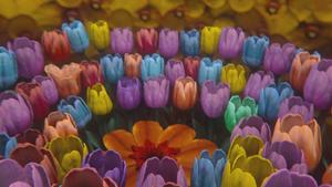 3x03 fleurs magiques couleurs fées