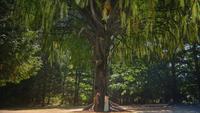 5x04 Arthur Guenièvre enfants arbre de Merlin secret prophétie