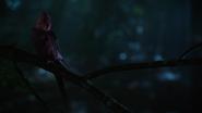 6x01 oiseau rouge forêt de Storybrooke nuit