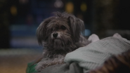 5x18 Toto chien chevet Dorothy Gale