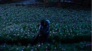 5x10 Killian Jones Capitaine Crochet Ténébreux Emma Dark Swan baiser champ de fleurs roses réconciliation