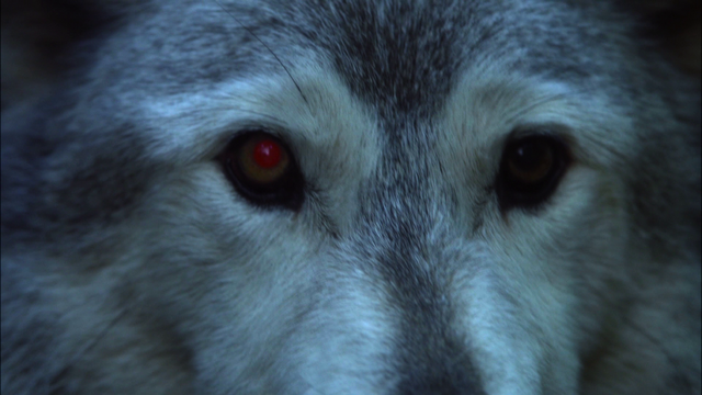 File:107WolfClose-Up.png