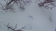 115DogFootprints