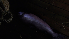 210Fish