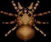 ArachnidQueen