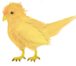 Ember bird