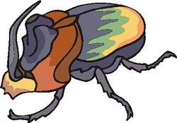 Forma Escarabajo Completo