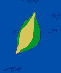 Isla Aroka