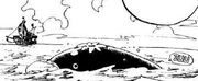 Balena Kappa