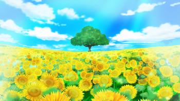 Camp de Flors