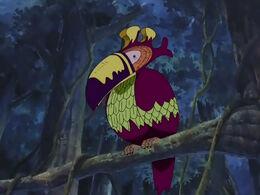 Ocell del Sud