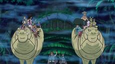 El grupo de Luffy en busca de Nekomamushi