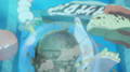 Rois des mers sauvent Noah