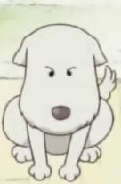 Chou Chou Cachorro