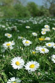 Flowers everywhere von Genista