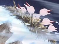 Zigolo delle nevi pulcini
