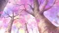 Sakura Infobox.png