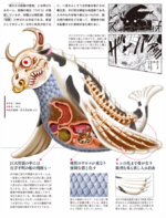 Sea Cow Biology