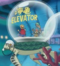 Tartaruga Elevador