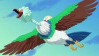 Pájaros del Reino de Torino
