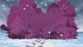 Snow Spore
