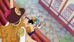 Aphelandra Stops Luffy