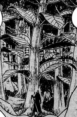 Árvore Kona