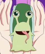 Den den mushi de boa sandersonia