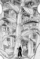 Kona Tree Infobox.png