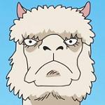Alpacacino profila