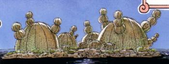 Isla de los Cactus
