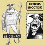 Crocus sbs