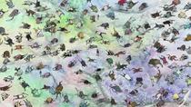 Luffy's Haki Knocking Out 50,000 Fish-Men