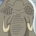 Sea Elephant Portrait