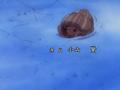 Tsuki to Taiyo Fin