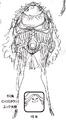 Charlotte Citron Manga Concept Art