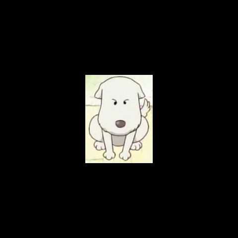 Shushu quando era un cucciolo