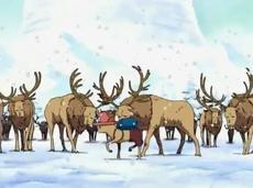 Pequeño Walk Point frente a renos