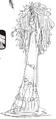 Charlotte Brûlée Manga Concept Art