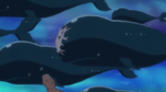 Island Whales