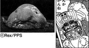 SBS 66 Blobfish
