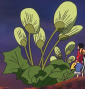 Midori Boshi: Uchiwa Grass
