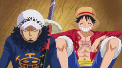 Law And Luffy On Their Way to Dressrosa