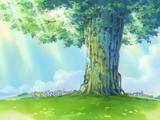 Дерево-сокровище Адам