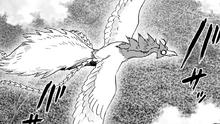Phoenix Man Rescue