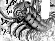 Senior Centipede Full Body