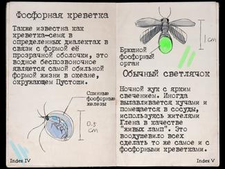 Book fauna